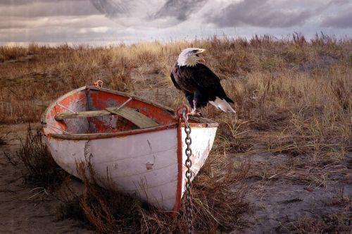 adler ship steppe