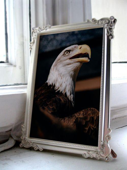 adler bird image