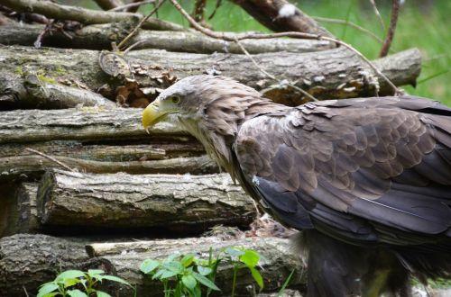 adler forest eco-park