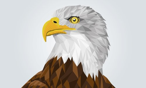 adler  bald eagle  drawing