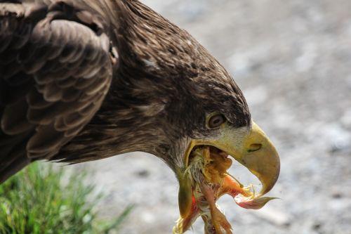 adler food eat