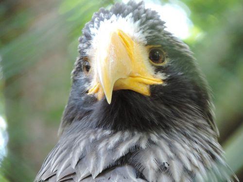 adler zoo bird of prey