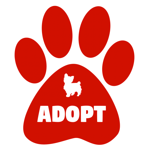adopt dogs cats