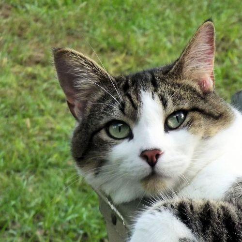adorable cat feline
