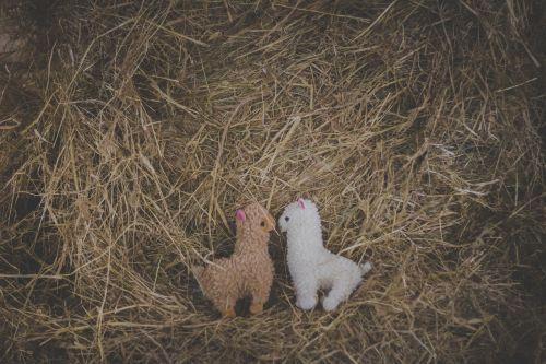 žavinga,alpaka,alpaka,gyvūnas,fonas,ruda,galvijai,grietinėlė,mielas,apdaila,ecru,purus,draugiškas