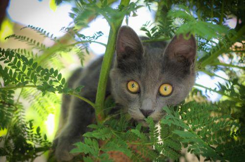 Adorable Curious Gray Kitten!