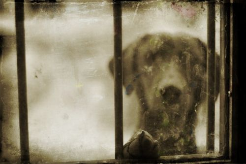 Adorable Dog In The Window