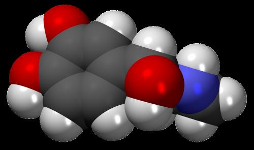 adrenaline hormone neurotransmitter