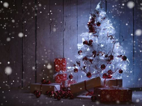 advent fir christmas tree