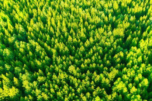 Aerial Tree Tops