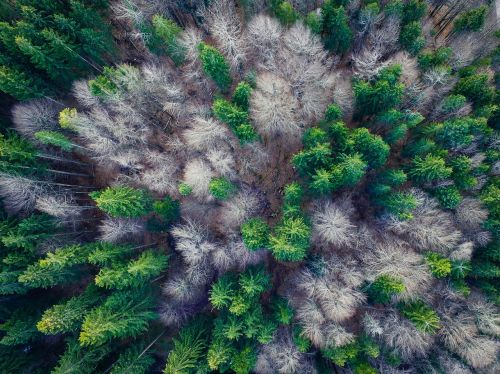 aerial view forest top