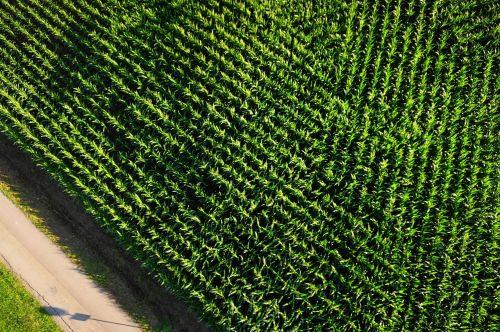 aerial view cornfield arable