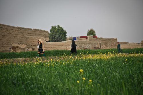 afghanistan farm woman