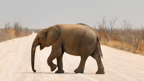 elephant baby elephant africa