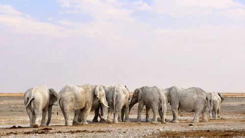 africa namibia nature