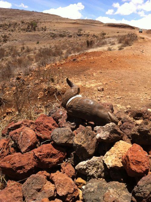 africa safari tanzania