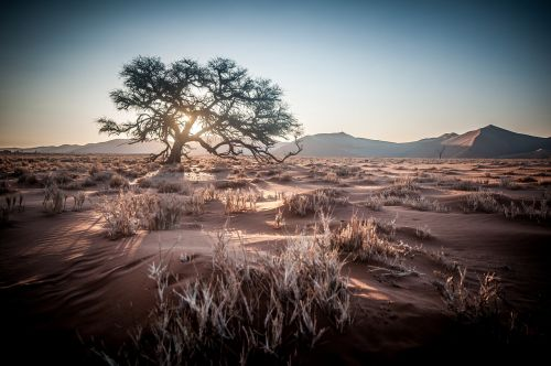 afrika,Namibija,safari,saulėtekis,smėlio kopa,medis,saulėlydis,dykuma,smėlis,kopos,sausas,kraštovaizdis,smėlio,gamta,Nacionalinis parkas,Namib dykuma,Sossusvlei,dykumos kraštovaizdis,negyvas augalas,soussousvlie,dangus,šventė,kelionė