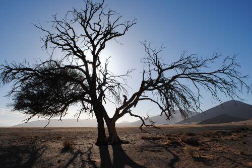 afrika,Namibija,Sossusvlei,dykuma,namib,smėlio kopa,medis,sausas,Nacionalinis parkas,Namib dykuma,kraštovaizdis