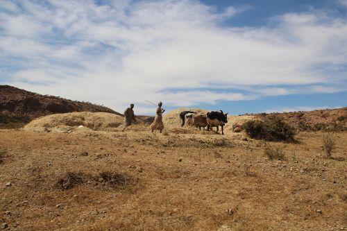 africa eritrea agriculture