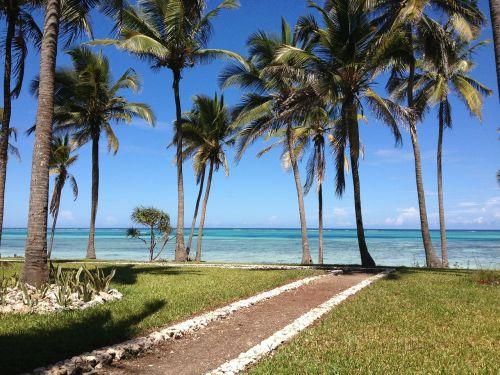 africa sea palms