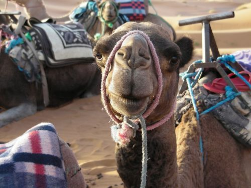 africa morocco the sahara desert