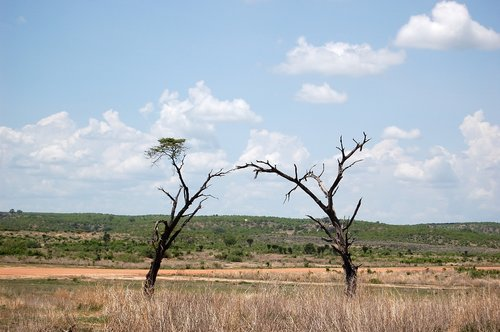 africa  tanzania  prairie