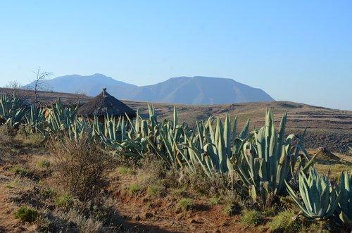 africa  lesotho  landscape