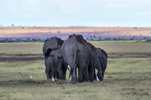 africa  kenya  safari