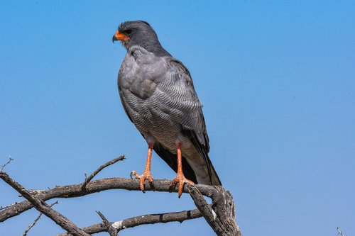 africa  animal  bird