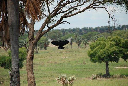 africa  bird  uganda