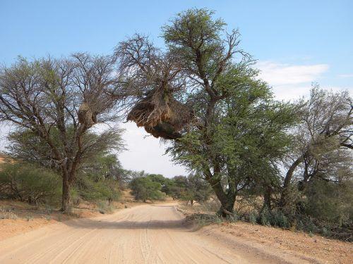 africa kgalagadi national park