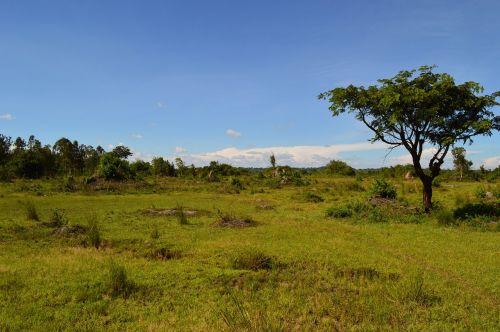 africa steppe uganda