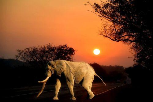 africa sun wild life elephant
