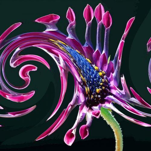 African Daisy Twirl