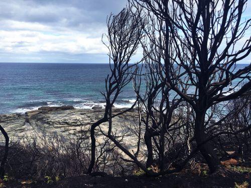 after bush fire melbourne australia