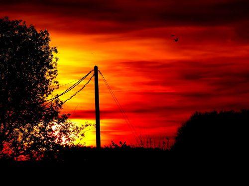 afterglow sunset tree