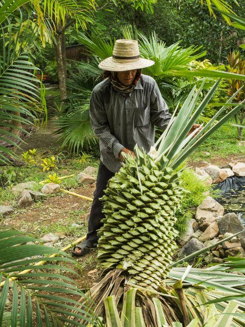 agave tribe gardener