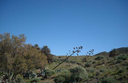agave agave flowers isleta del moro