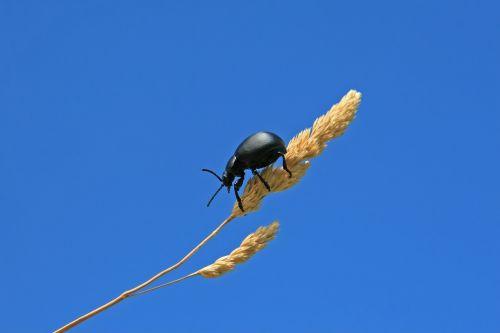 agriculture animal arthropod
