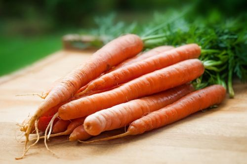 agriculture carrots close-up
