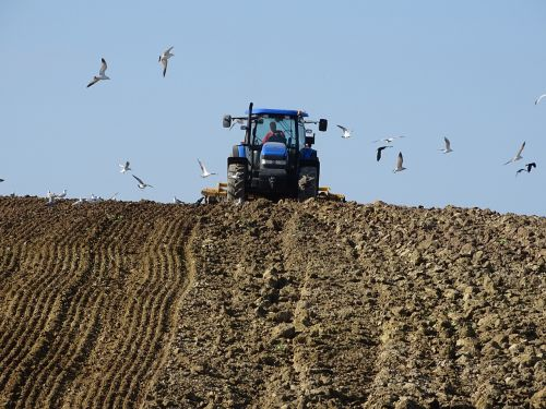 agriculture tillage field