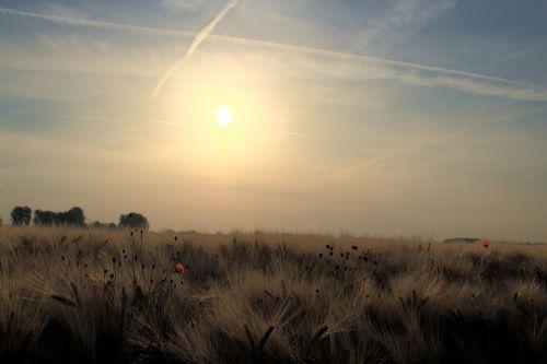 Žemdirbystė,laukas,grūdai,kraštovaizdis,grūdai,gamta,kviečių smaigalys