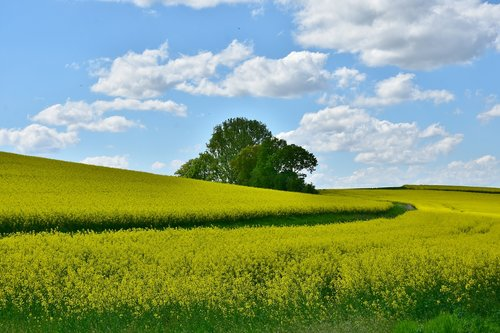agriculture  field  landscape