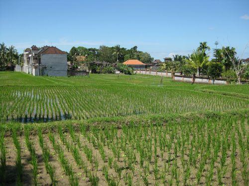 agriculture farm fields