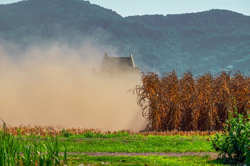 agriculture  field  corn