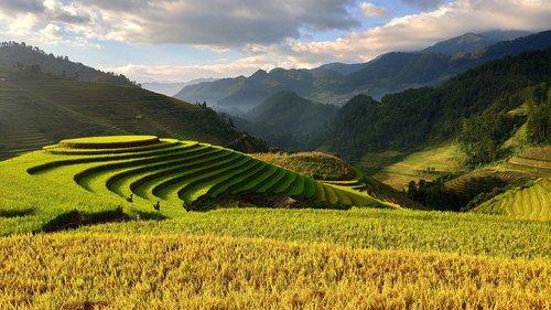 agriculture  vietnam  terraces