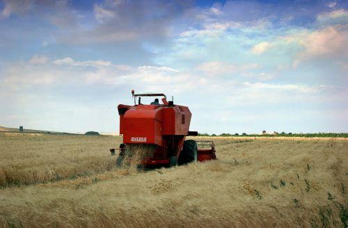 agriculture puglia wheat