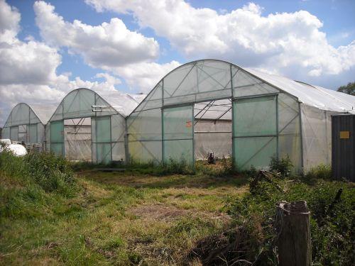 agriculture gardening vegetables