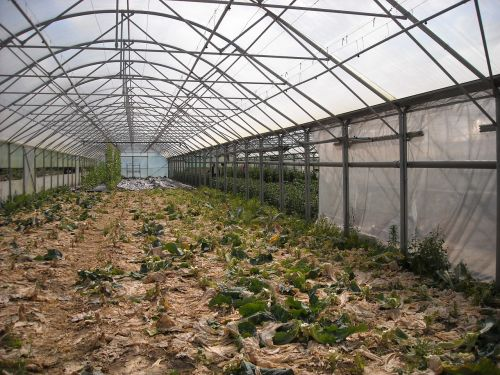 agriculture greenhouse conservatory
