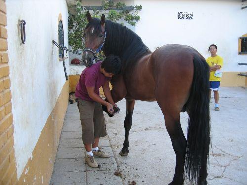al-kazar horses andalucia